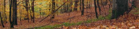 castillon_saison_automne